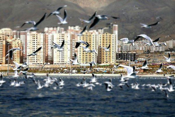 گود رها شده دریاچه شهدای خلیج فارس پس از ۷ سال پر شد