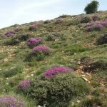 تولید علوفه مرتعی به دلیل خشکسالی ۴ میلیون تن کاهش می یابد