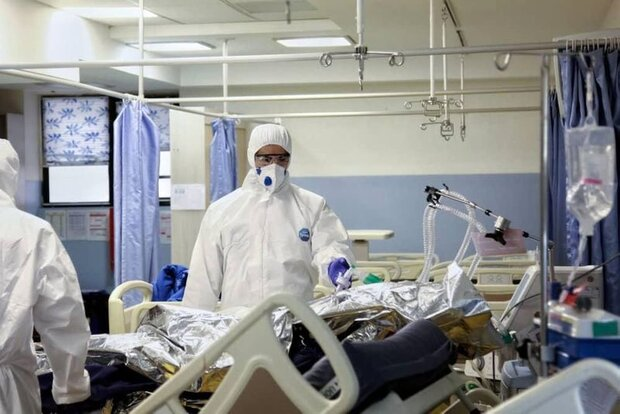 تعداد بیماران بستری کرونایی در استان بوشهر به ۳۰۰ نفر رسید