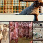 خطر کمیاب شدن گوشت در بازار/صنعت دامداری در آستانه بحران قراردارد