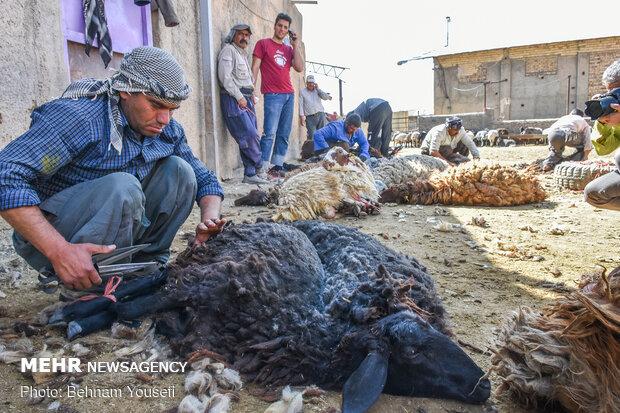 تبدیل خطر آلودگی محیطی به درآمد پایدار در روستاهای خراسان شمالی