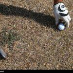 برگزاری دوره آموزشی گلف برای بانوان برای نخستین بار در تهران