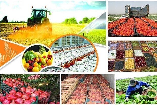 قوانین دست و پاگیر در بخش کشاورزی باید مانعزدایی شود