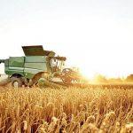 بیش از ۶ هزار تن گندم در آذربایجان شرقی خریداری شد