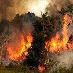 مهار حریق در «نانه ویژه» / بخشی از جنگلهای بکر پاوه در آتش سوخت