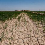 حجم اعتبارات برای جبران خسارت بخش کشاورزی خوزستان افزایش یابد