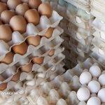 فقط تخم مرغ نگهداری شده در یخچال را خریداری کنید