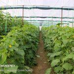 توسعه فراتر از پیشبینی گلخانهها در آذربایجانشرقی