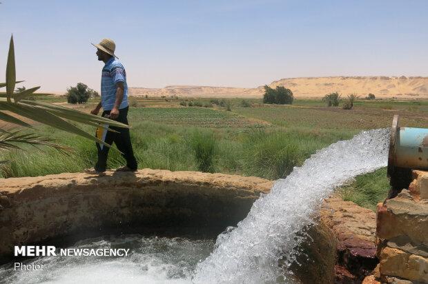 اجحاف به کشاورزان شمال خوزستان/نیشکر هفتتپه آب مازادبرداشت میکند